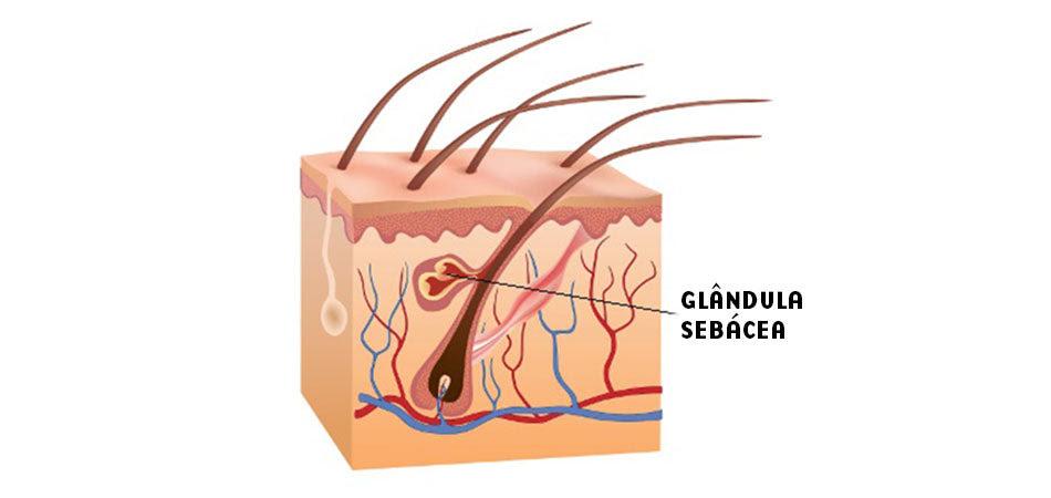 Glândula Sebácea